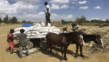 People affected by the conflict in Tigray load food aid provided by USAID and Catholic Relief Services onto a donkey cart to be tansported to their home, outside Mekele, Ethiopia. ( (Catholic Relief Services via AP)